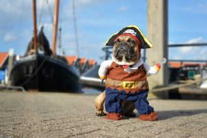 Dog dressed like pirate on dock