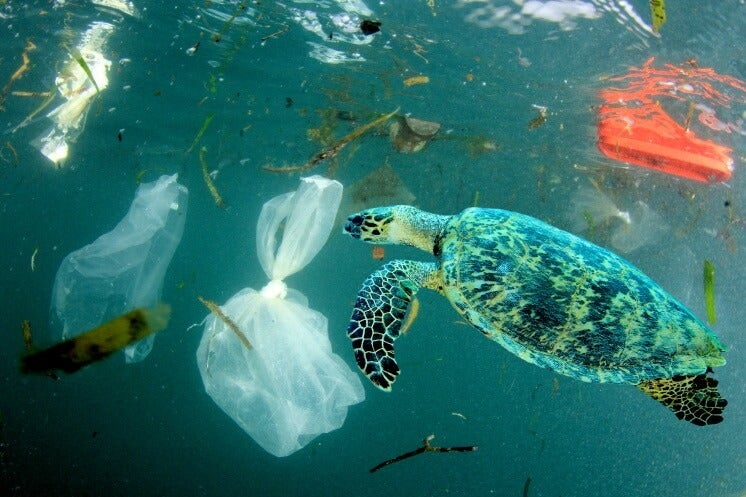 Turtle swimming amongst many items of ocean debris